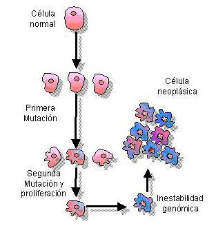 Compuesto ofrece posibilidades de evaluar evolución del cáncer